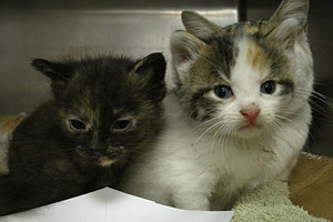 Kittens from Chicago who were saved