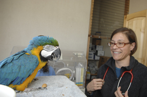 Avian veterinarian Dr. Margaret with a parrot at Best Friends clinc