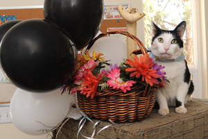 Andrew the cat at his adoption party