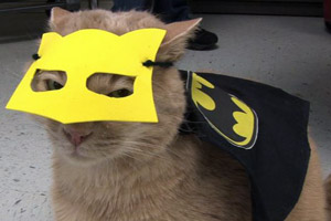 Cat dressed up as Batman