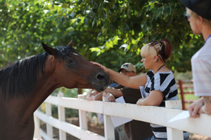 Volunteer interacting with a horse at Best Friends Animal Sanctuary