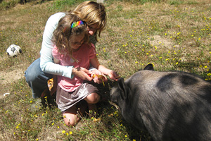 Hogan the pig getting fed treats from a little girl and her mom