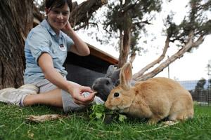 Two adoptable bunnies