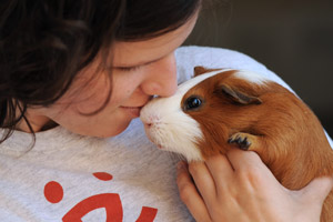 Woman kissing a brown and white guinea pig on the nose