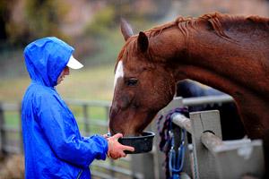 Woman feeding a horse