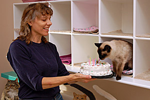 Cybella the FeLV cat celebrating her 21st birthday with a cake
