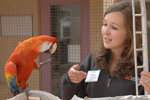 Former intern asking a rescued parrot to step up onto her hand