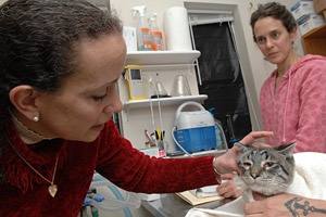 Veterinary ophthalmologist Dr. Susan Kirschner examining a cat