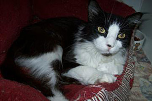 Tuxedo cat who was spayed by Pearl River SPCA in Picayune, Mississippi, using their $10,000 grant