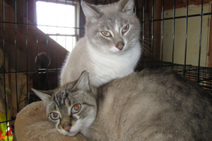 Cats who will be spayed as part of the Humane Society of Somerset County's TNR program