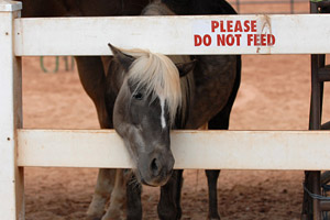 "Horse sticking her head through a fence that reads ""Please do not feed"""