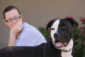Sherlock the pit bull who is receiving training with Kathy