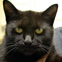 All-black cat named Jane