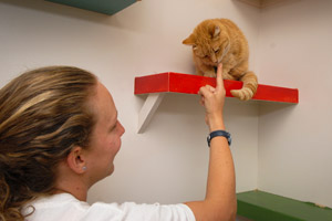 Caregiver petting one of the Pahrump cats