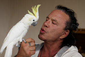 Mickey Rourke interacting with the parrot he adopted