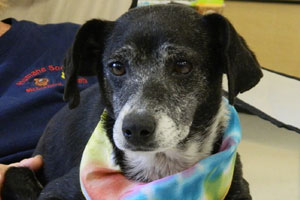 Senior dog named Missy who was adopted