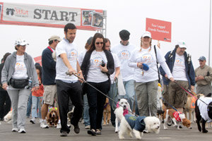 People with their dogs participating in a Best Friends' Strut Your Mutt event