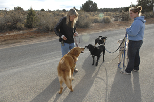 Sunshine Girl meeting other dogs successfully