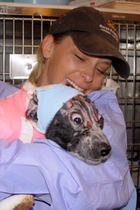 Puppy wrapped in bandages being snuggled by a caregiver