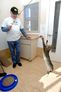 Donald Ahlas playing with a cat with a wand toy at Best Friends