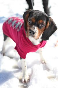 Dog wearing a sweater from dressbarn