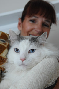 Freowin the cat who has urinary tract disease