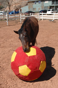 Horse playing with a large ball