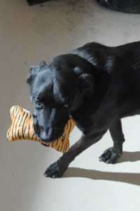 Jude the dog who loves toys and sleepovers