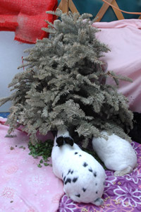 Rabbits chewing on branches of a Christmas tree
