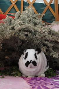 Rabbit sitting under a Christmas tree