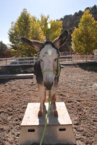 Sweetheart the donkey