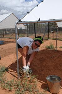Volunteer weeding at Best Friends Animal Sanctuary