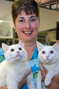 Vet tech holding white cats who were spayed as part of the trap-neuter-return program in Jacksonville, Florida