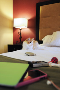 TJ the cat on a sleepover in a hotel room