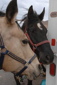 Riley the horse (left) who will get a prosthesis with another horse