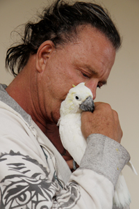 Mickey Rourke snuggling his adopted lesser sulfur-crested cockatoo