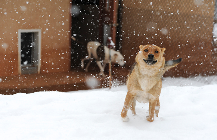 Weeee, it's a snow day!