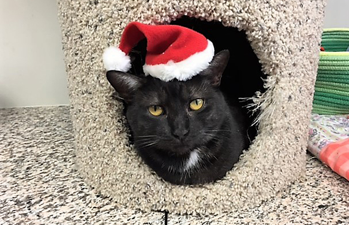 Pearl the black cat is available for adoption from the Peter Zippi Memorial Fund, Inc.