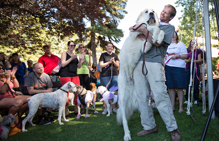 Great pyrenees dog with his person at Strut Your Mutt