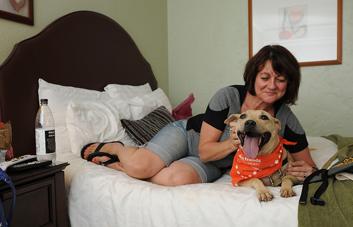 Dog sitting on a bed with a woman