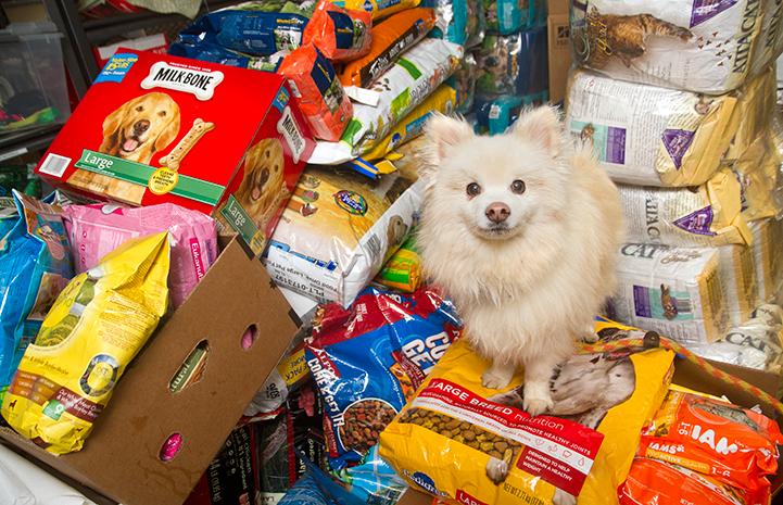 Pomeranian dog on huge pile of dog food