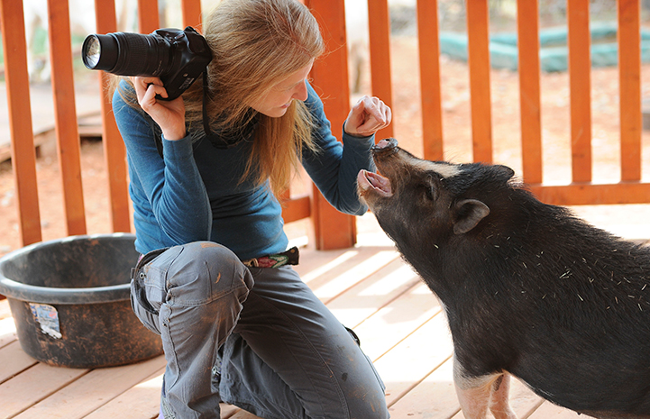 Woman photographer with a potbellied pig