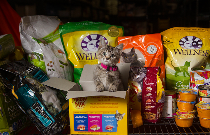 Tabby kitten in front of a bunch of cat food donations