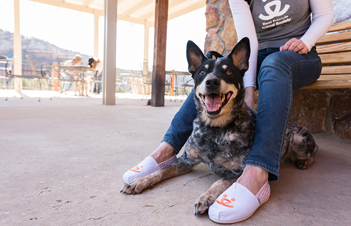 Australian heeler with woman wearing BOBS from Skechers shoes