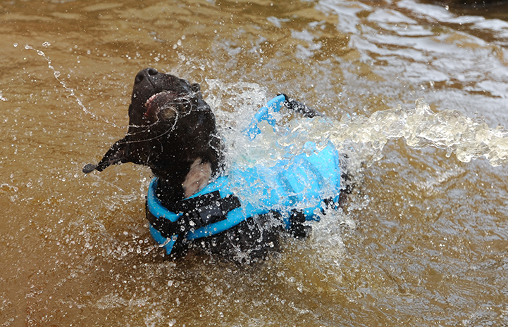 Lordes the pittie frolicking in the water