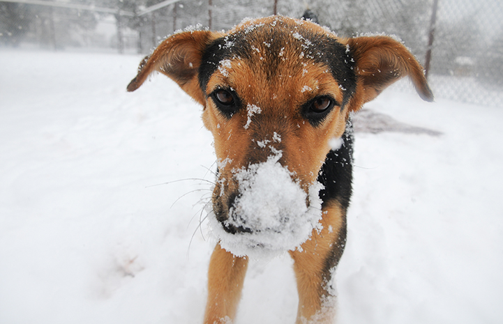 Nope, I wasn't sniffing around in the snow. Why do you ask?