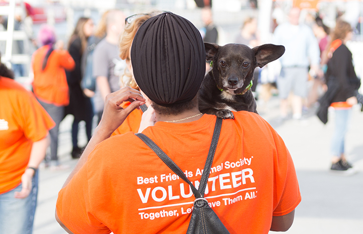 Volunteer holding small black dog at Strut Your Mutt