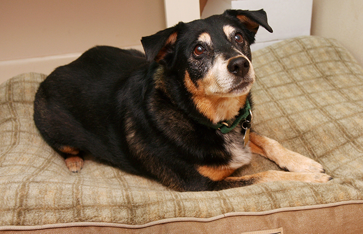 Dog resting on a comfortable bed
