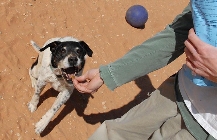 Dog being fed a dog treat