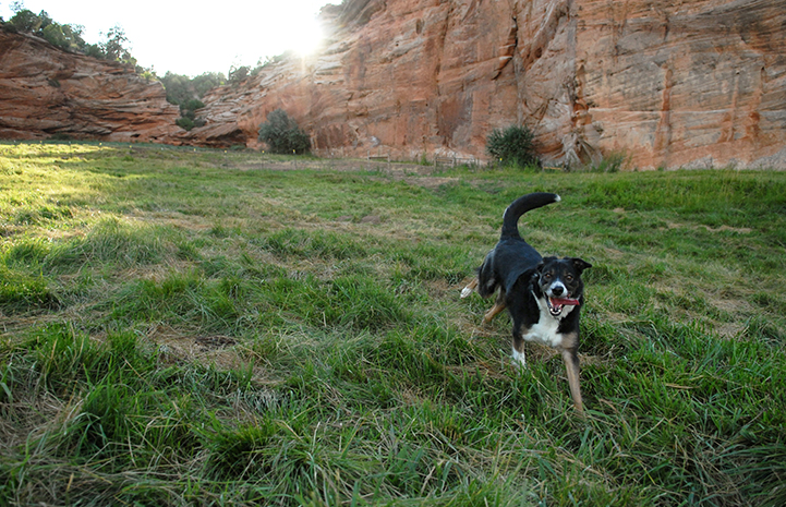 Dog running in a field at Best Friends Animal Sanctuary